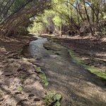 On The Hassayampa River Preserve