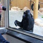 Antwerp Zoo (Dierentuin) Foto