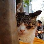 Shibuya Cat
