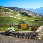 Photo de Corniche Lavaux Vineyards
