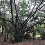 ภาพถ่ายของ สวนสาธารณะและสวนพฤกษชาติ ศรีนครเขื่อนขันธ์