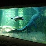 Turtles and Crocodile