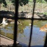 صورة فوتوغرافية لـ Zoobic Safari