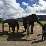 Monterey Zoo Foto