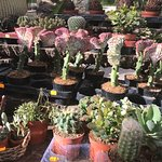 shop with outdoor spaces for plants and seeds on sale