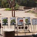 Picasso Elephants