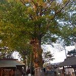 Ảnh về Higashihachiman Shrine