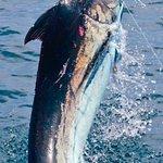 No bill billfish- 12 yr old grandson first blue marlin- 400 lbs