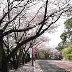 Foto di Haeundae Dalmaji-gil Road