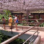 Exiting through the butterfly conservatory.