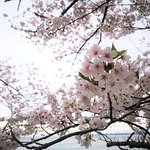 Foto de Kaizu Osaki