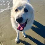 Roger after a swim at Coligney Beach!