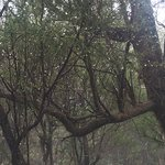 Photo of Garajonay National Park