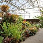 Bromeliad Greenhouse