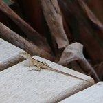 Free-range lizard