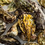 $1 Oysters every Wednesday