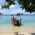 Panama Reef Diversの写真