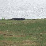 Royal St Cloud Golf Links照片