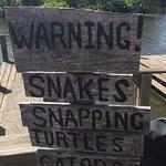 airboat & alligators