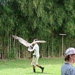 raptors show