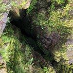 صورة فوتوغرافية لـ Lava Tree State Park