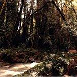 Muir Woods  !2 Miles (1 Hour)