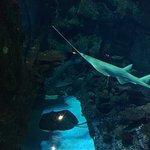 Foto de Shark Reef