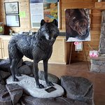 Photo of Grizzly and Wolf Discovery Center