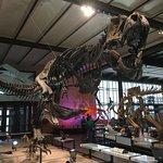 Photo de Institut royal des sciences naturelles de Belgique