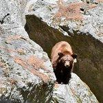 The bear on the Mist Trail April 2018