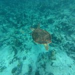We saw sea turtles every day!