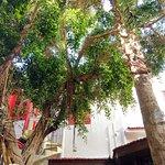 Kiniras Hotel-bild