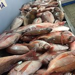 Saga Fish Restaurant Foto