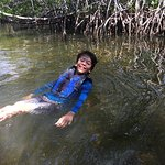 swimming among the mangroves