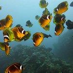 Valokuva: Lahaina Divers