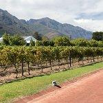 Biking into the winery