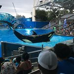 Nice whale show at Seaworld