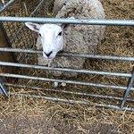 Foto de Smithills Open Farm