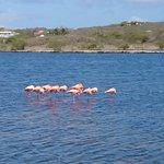 Photo of Flamingo Sanctuary Sint Willibrordus