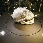 Cranio.