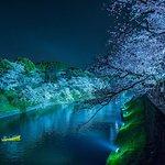 Chidorigafuchi at night during chery blossom season
