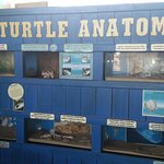 information about the turtles