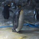 Photo of Nagasaki Penguin Aquarium