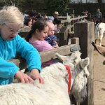 My Wife, Isla and Ivy getting hands on with the donkeys