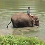 Elephant with Mahout getting ready for a bath