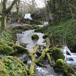 Janet's Foss Glade