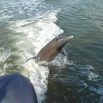 dolphin jumping in the boat wake