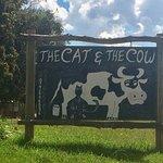 The Cat & The Cow, Tonteldoos