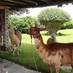 Photo of Pachacamac