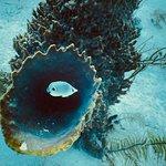 Barrel Spongeray